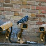 Bird Proofing for Car Parks and Commercial Structures