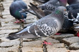 Bird and Pigeon Problems - Tell Us About Your Problems